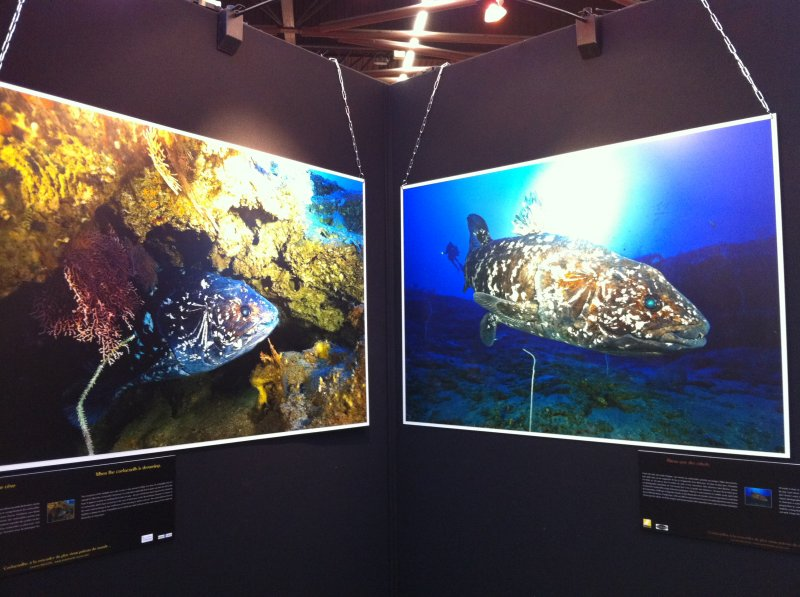 salon-plongée-paris-2011-photos-laurent-ballesta-coelacanthe
