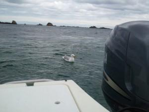 Temps gris en mer bretonne