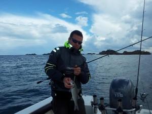 Pêche de bar au leurre souple en bretagne